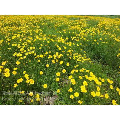 宿根花卉常见的种类,多年生的花那些开花比较好看@茗茜花卉基地一手供应
