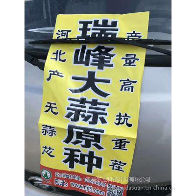 瑞峰无芯蒜原种