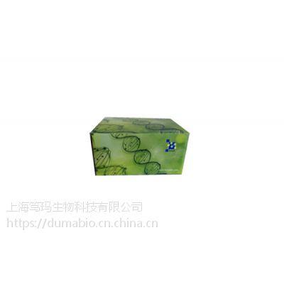 笃玛 绵羊胱抑素C(Cys-C) ELISA 试剂盒 产品简介