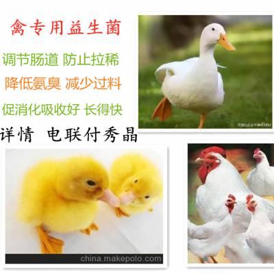 提高饲料利用率肉禽专用微生态制剂厂家直销