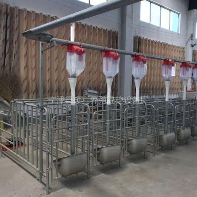 养猪自动喂料线养猪自动喂料系统可以防控疫情的扩散