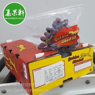 广州进口水果市场南非无籽红提葡萄批发货源