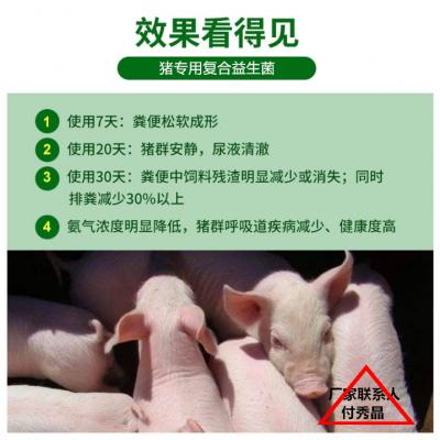 冬季猪圈氨臭味太大用健美猪专用益生菌