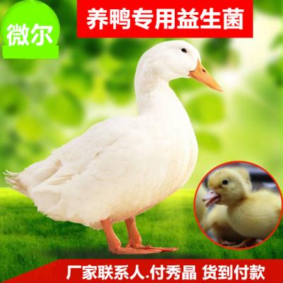 让鸭子肠道好吸收好的鸭用益生菌