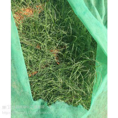 提供四川成都绿化草种护坡绿化防护