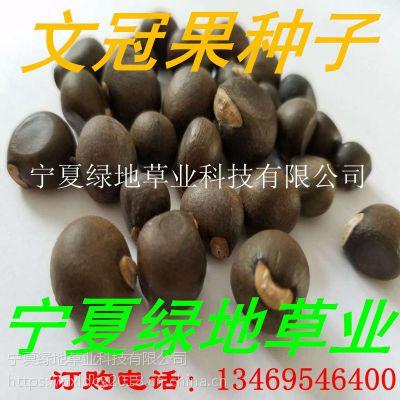 批发林木 【文冠果种子】文冠果树种子 观赏类植物 耐寒