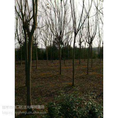 江苏栾树价格 江苏15公分栾树多少钱一棵?
