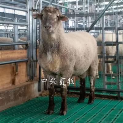 塑料羊地板 厂家直销漏粪地板 奶山羊漏粪羊床