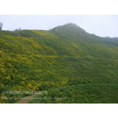 废弃山体客土喷播绿化生态修复环保绿化@矿山高次团粒喷播施工