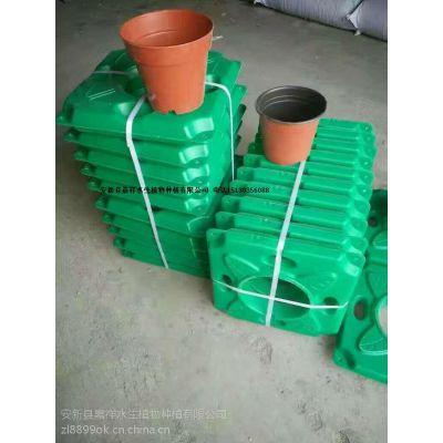 生态浮床厂家 生态浮床厂家直销 生态浮床技术