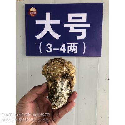 鲜活海鲜生蚝牡蛎海蛎子 生猛水产贝类生鲜乳山野生带壳烧烤食材