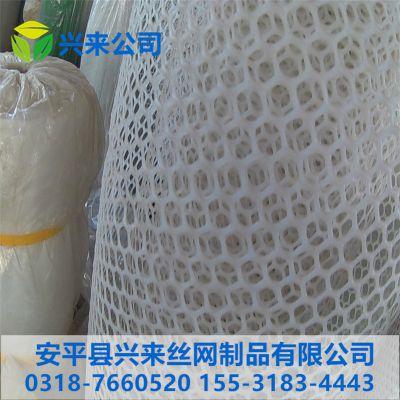 通用塑料网 床垫塑料网 小鸡育雏网多少钱一米