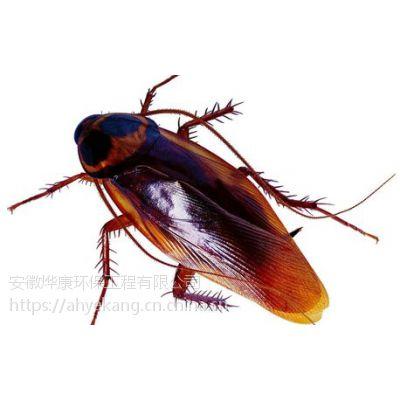 灭蟑螂合肥灭蟑螂公司