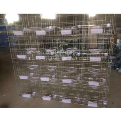 江西龙山鸽子笼批发防腐耐用4层16位肉鸽笼安平兴博铁丝镀锌鸽子笼