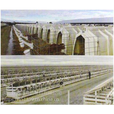 山东养牛犊牛视频岛开水屋犊牛栏畜牧养殖设浇小牛用品图片