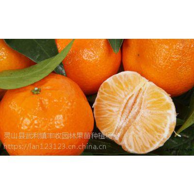 广西沃柑苗批发,沃柑苗价格,沃柑苗种植基地13877713093