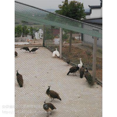 礼盒装孔雀热销中,安徽省浩然孔雀养殖有限公司
