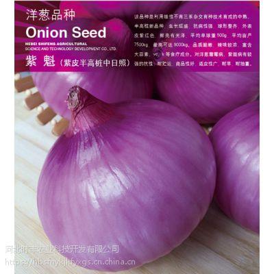 供应河北时丰农业科技开发有限公司时丰牌洋葱种子新品种高产紫魁洋葱A05
