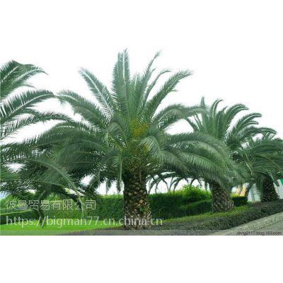 大量供应马来西亚棕榈油