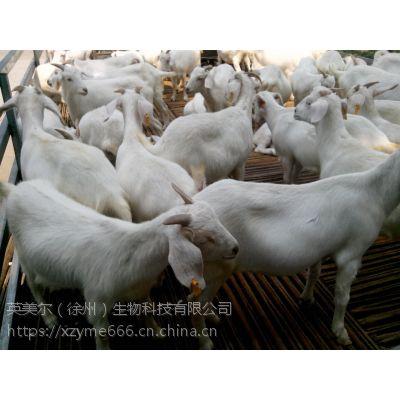 羊用促长添加剂 高效羊用催肥添加剂
