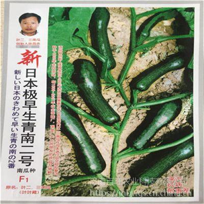 【新日本极早生青南二号】特色南瓜种子 小南瓜种子