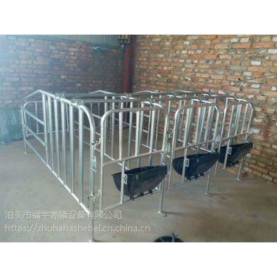 带食槽定位栏母猪觅食方便避免大量活动