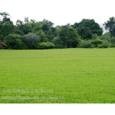 卖草坪草皮卷负责铺草坪送货上门承接绿化工程施工