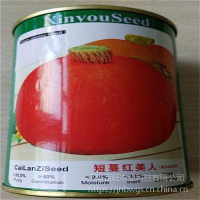 批发杂交板粟南瓜种子 日本南瓜种子 蜜本南瓜种子 小南瓜种子