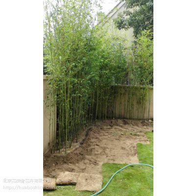 北京绿化竹子,观赏竹子,庭院绿化竹子,四季常绿竹子