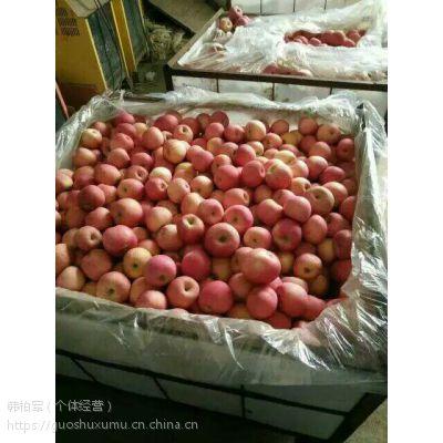 山东红富士苹果近日批发行情推荐