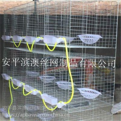 滨澳直销养殖笼具 鸽笼子 兔子笼 鸡笼 群鸟笼 鹌鹑笼 可批发 可零售