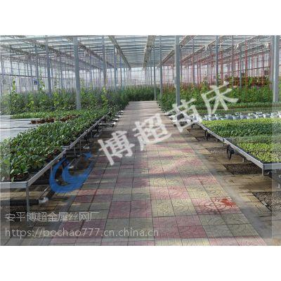 移动苗床广泛应用于大棚温室