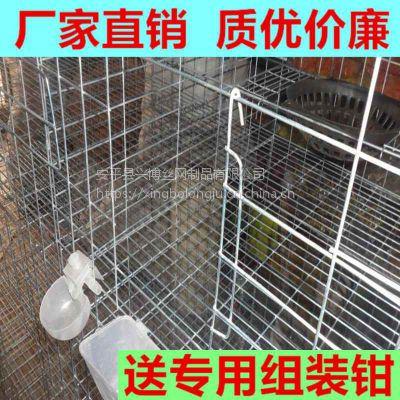 全新直立3层鸽子笼价格便宜兴博丝网加工定制铁丝镀锌鸽子笼具指导安装