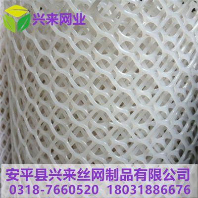 台州塑料网 护坡塑料网 网上育雏网床宽度合适