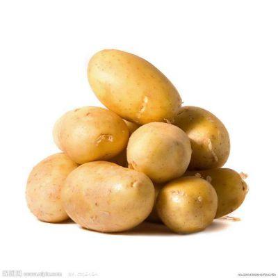 供应荷兰马铃薯种子厂家一级土豆种子
