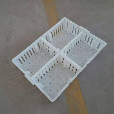 优质塑料苗箱价格雏禽运苗箱小鸡周转箱规格