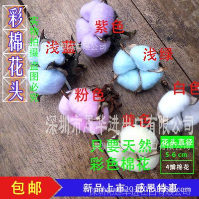 【包邮】棉花干花批发 彩色花头 拍摄道具艺术手工仿真永生花
