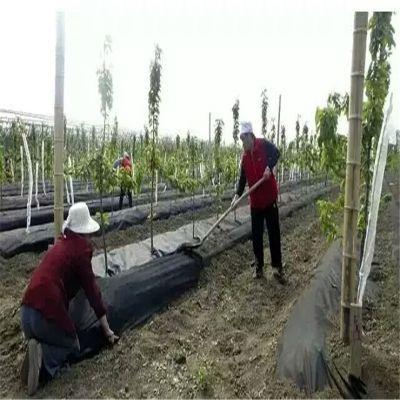 果园防草布有什么规格