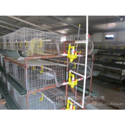 厂家直销肉鸡笼 钢丝网肉鸡笼自动化养殖设备 A型