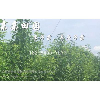 2公分李子苗出售价格,2018李子树苗批发多少钱一棵