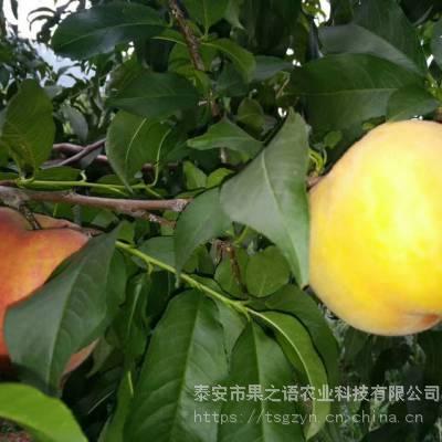 新品桃苗:6公分桃树、6公分桃树定购热线