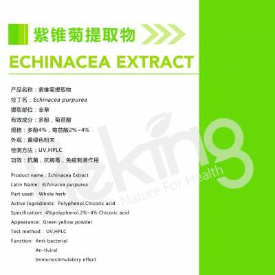 湖南紫锥菊提取物多酚与菊苣酸的工艺差异