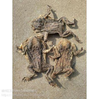 哪里在卖带皮干蟾,癞蛤蟆干几只一斤,价格怎样,通州蟾业