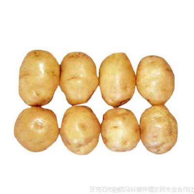 牙克石马铃薯种子