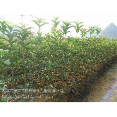 全国大量批发青叶碧桃,及其他草坪苗木等品种齐全