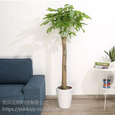 武汉绿化公司提供室内外植物销售,武汉绿化植物租摆养护公司
