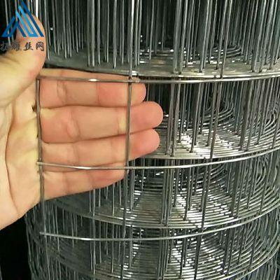 热镀锌焊接电焊网 厂家供应