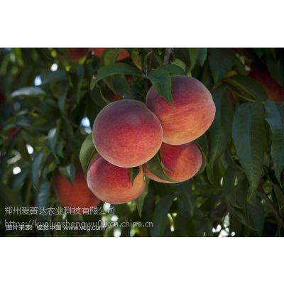 桃子膨大素桃树专用膨大剂