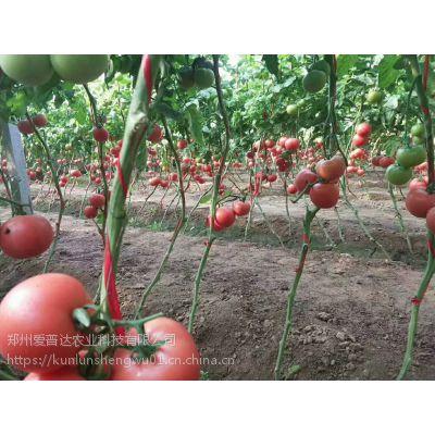 高钾水溶肥番茄专用高钾高钙冲施肥膨果钾宝