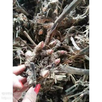 销售白芍芽子全国各地货到付款包回收指导